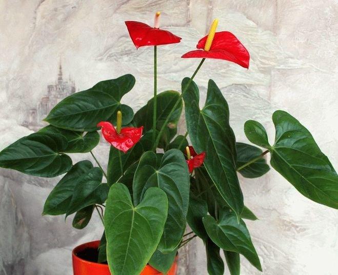 Выращивание ревеня из семян (в тч на даче Виктория и др)