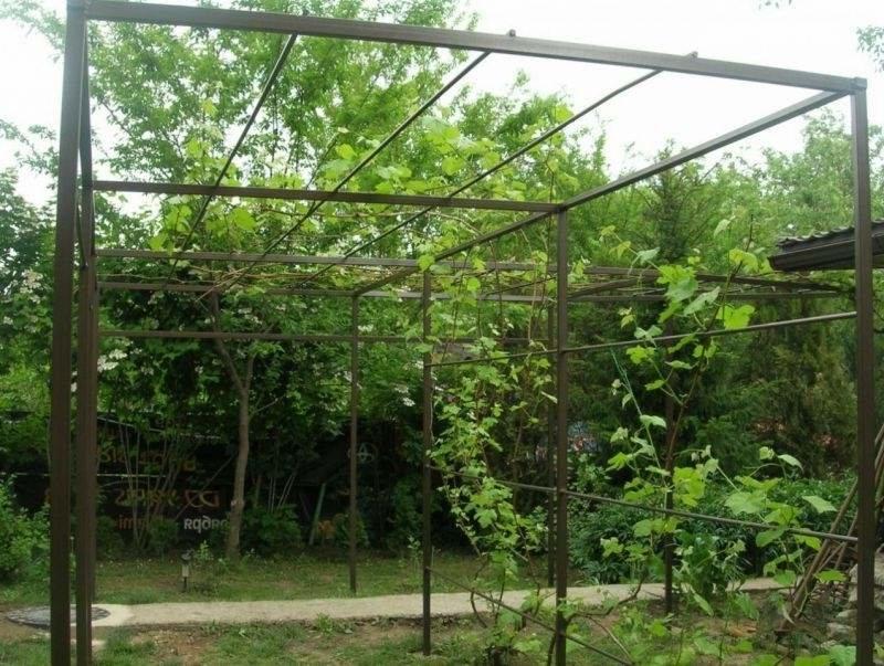 Как сделать перголы для винограда 689