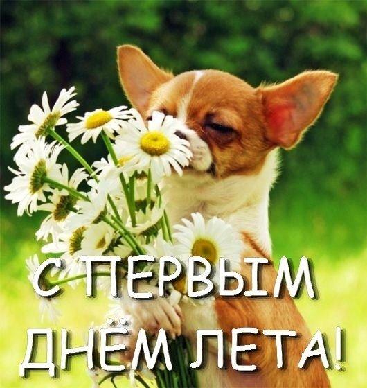 Поздравления с началом лета любимой