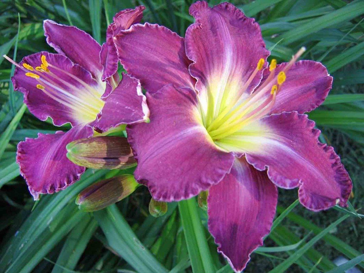 Цветы для девушек фото цены