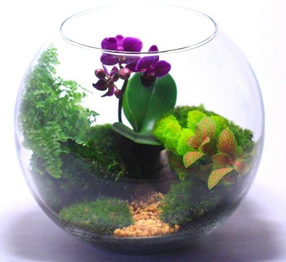 Как сделать флорариум для орхидей своими руками 74