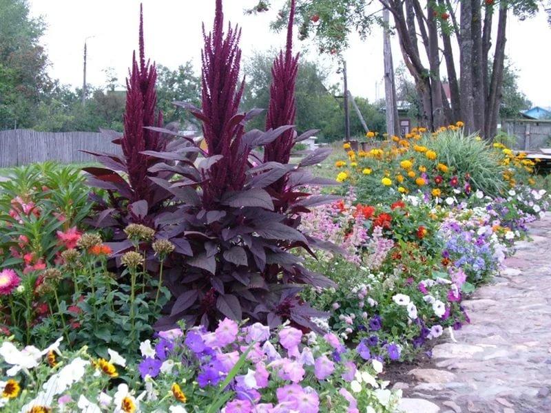 Цветы сорта для сада