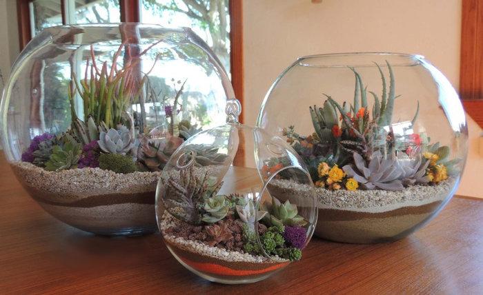 Суккуленты в аквариуме своими руками