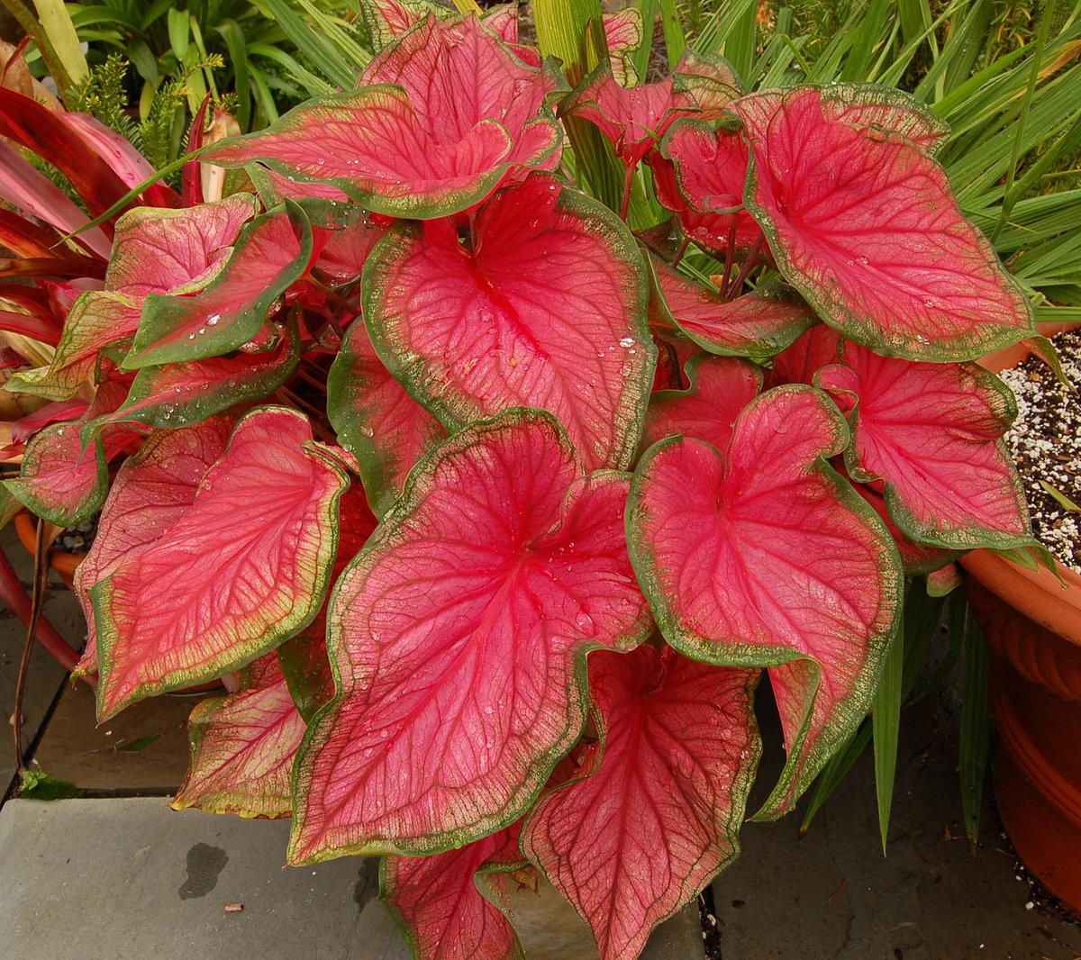 Фото листьев цветов с названиями