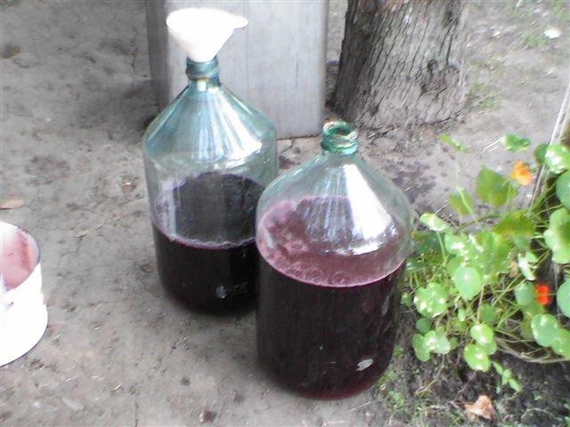 Вино в домашних условиях из винограда фото
