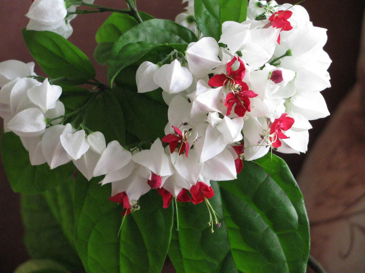 Какие есть цветущие цветы домашние фото и названия