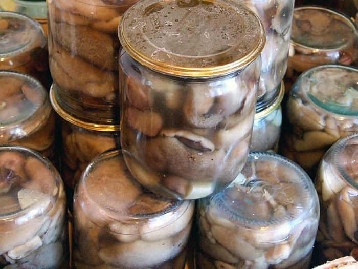 Засолка маслят на зиму в банках простой рецепт с фото пошагово