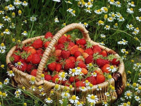 Лето цветы в огороде