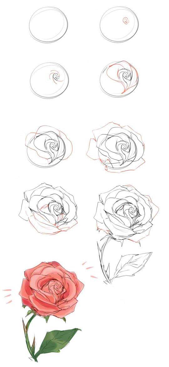 Как нарисовать розу своими руками поэтапно 70