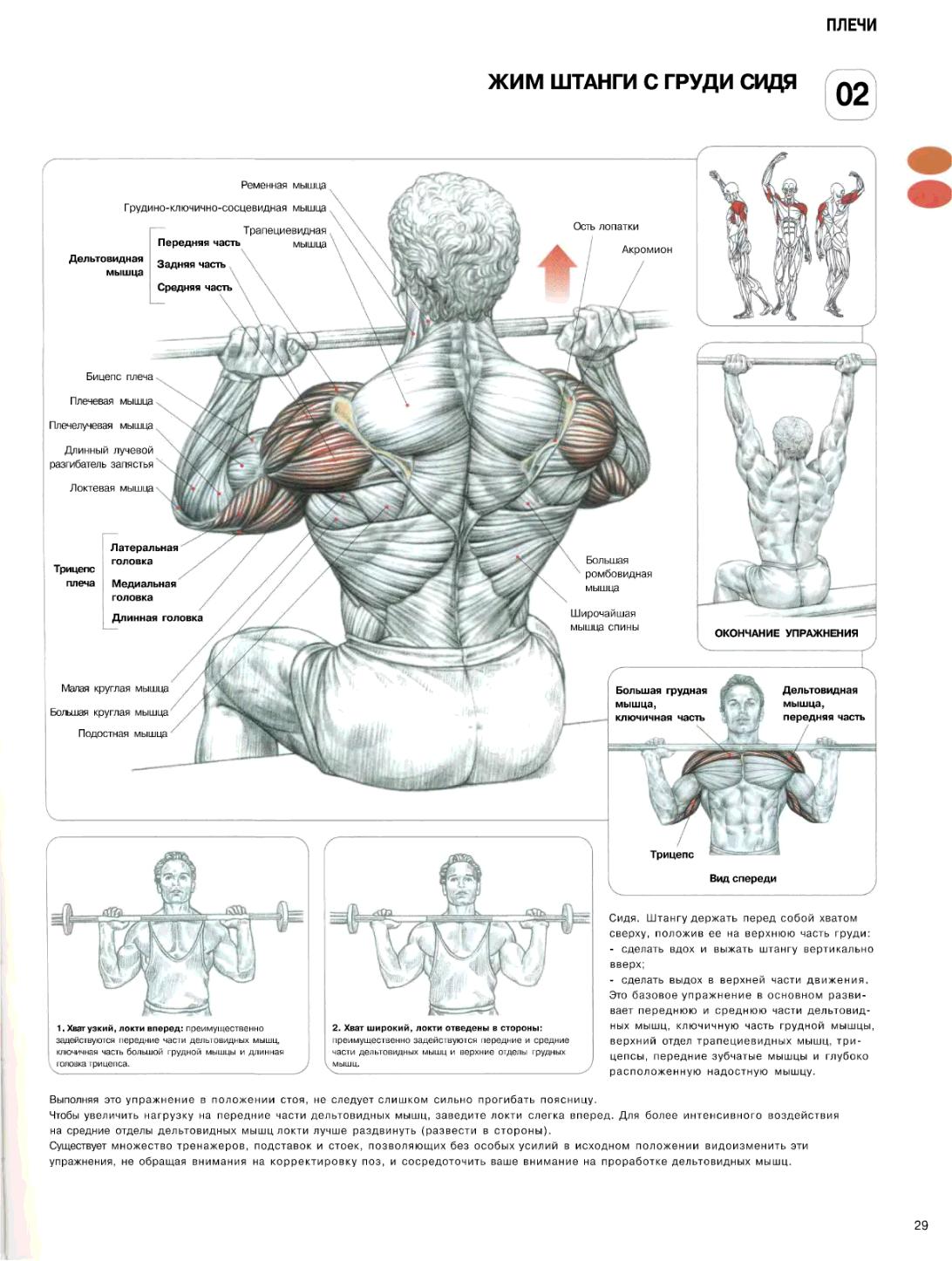 Как сделать грудную мышцу красивой