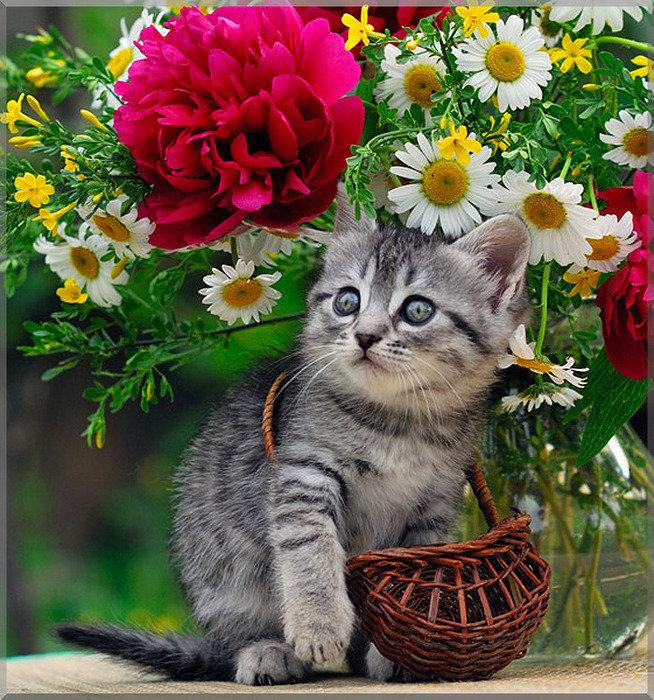 Красивые открытки кошки с днем рождения 88