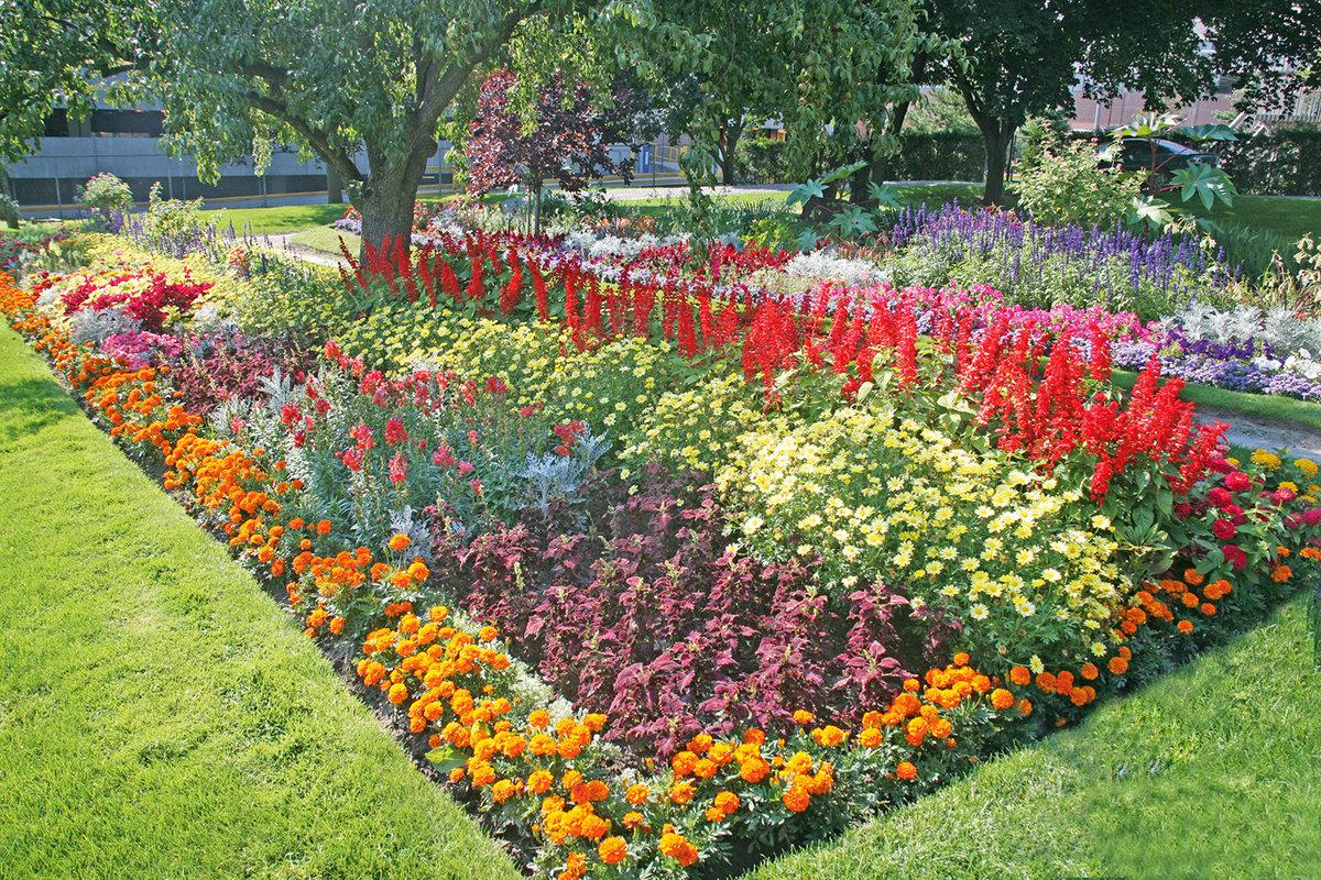 Какие цветы посадить на клумбе чтобы цвели все лето фото
