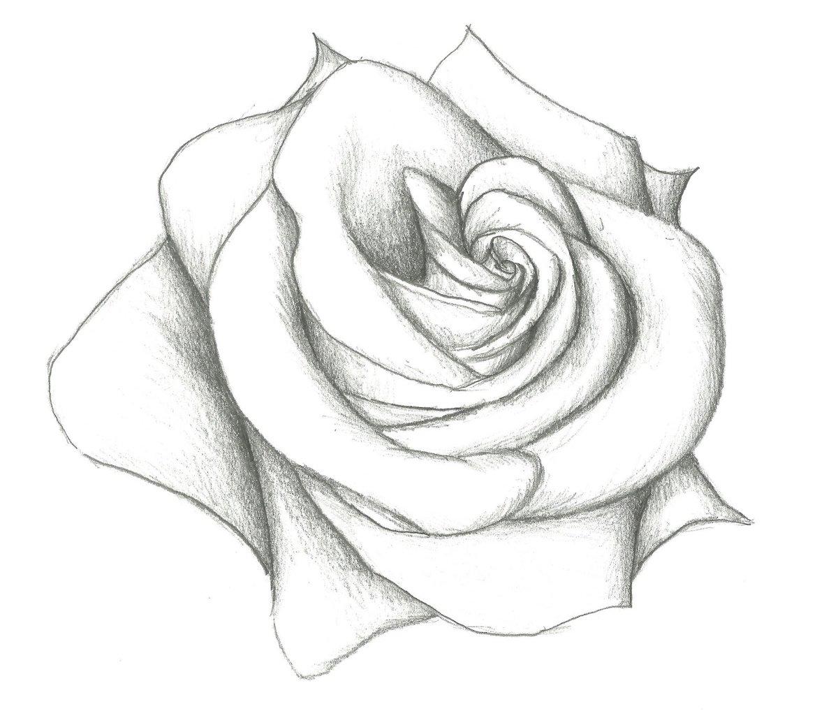 Рисунки розы для срисовки 40