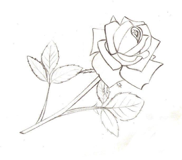 Рисунки розы для срисовки 200