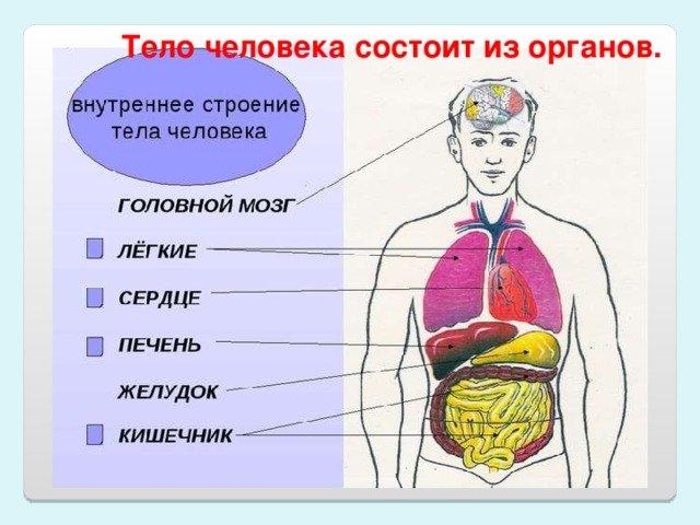 Организм человека схема внутренние