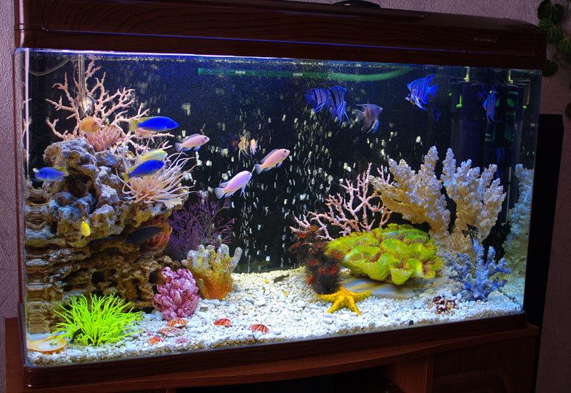 Как сделать красивые аквариум