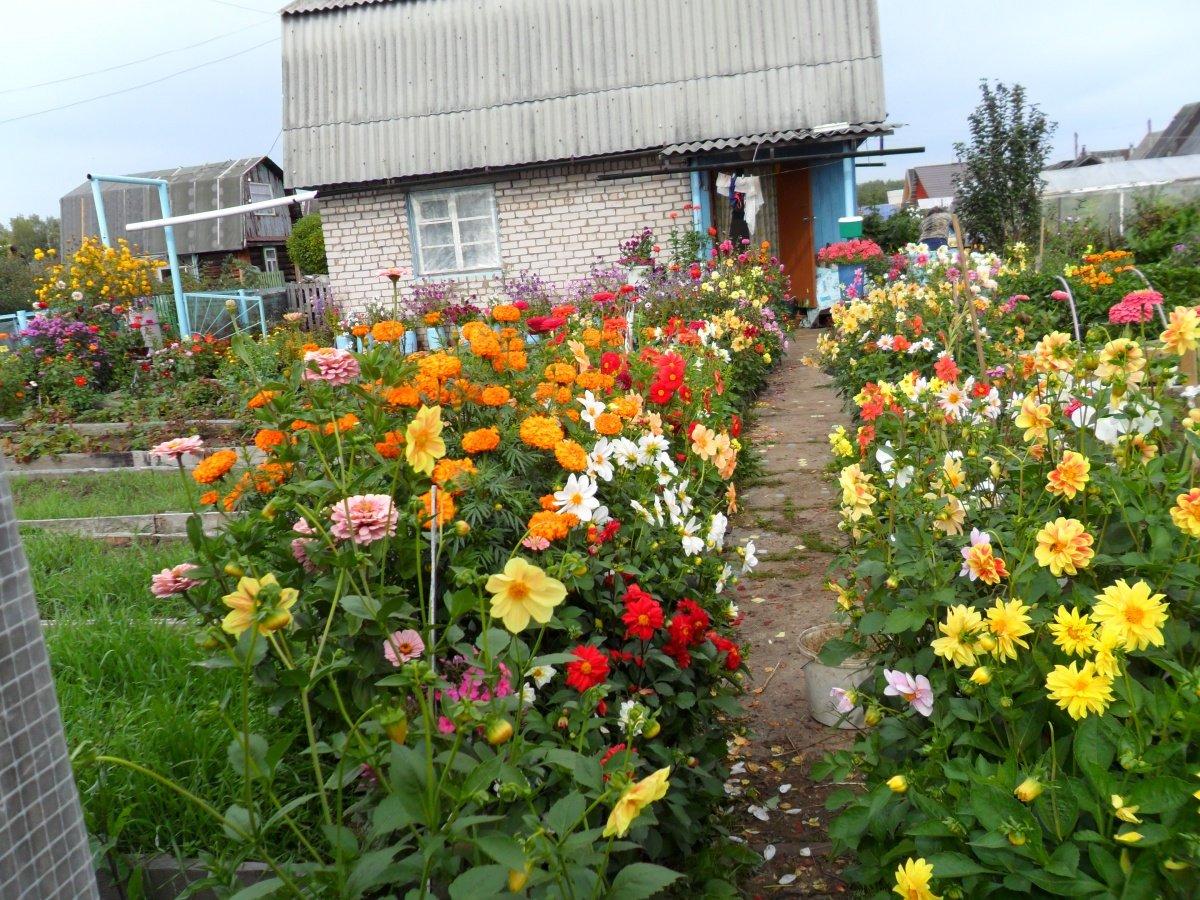 Сайт цветы для дачи фото