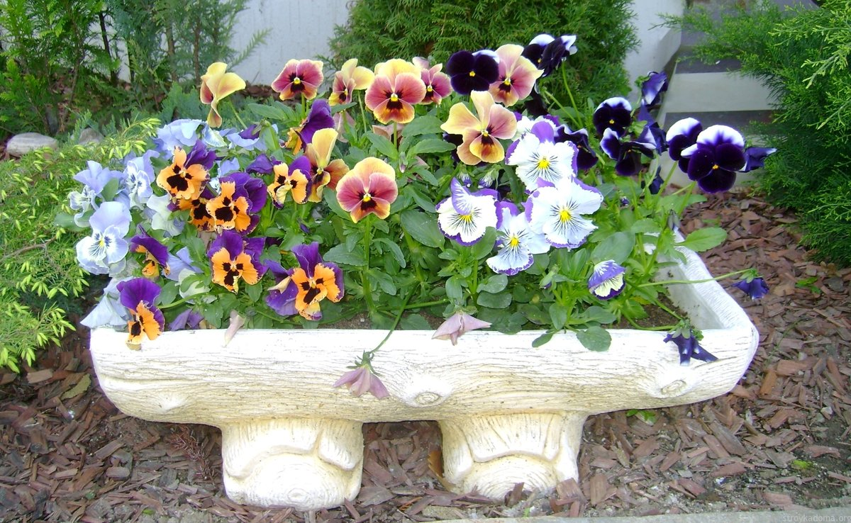 Маленькие цветы для клумбы фото