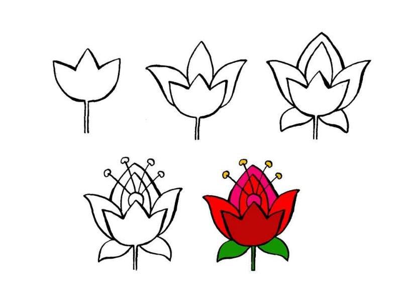 Как нарисовать поэтапно аленький цветочек