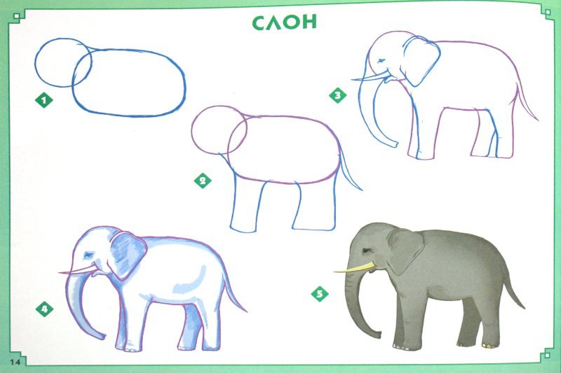 Нарисовать поэтапно слон