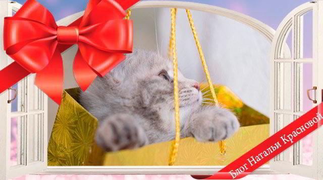 Подарки для котов на день рождения 322