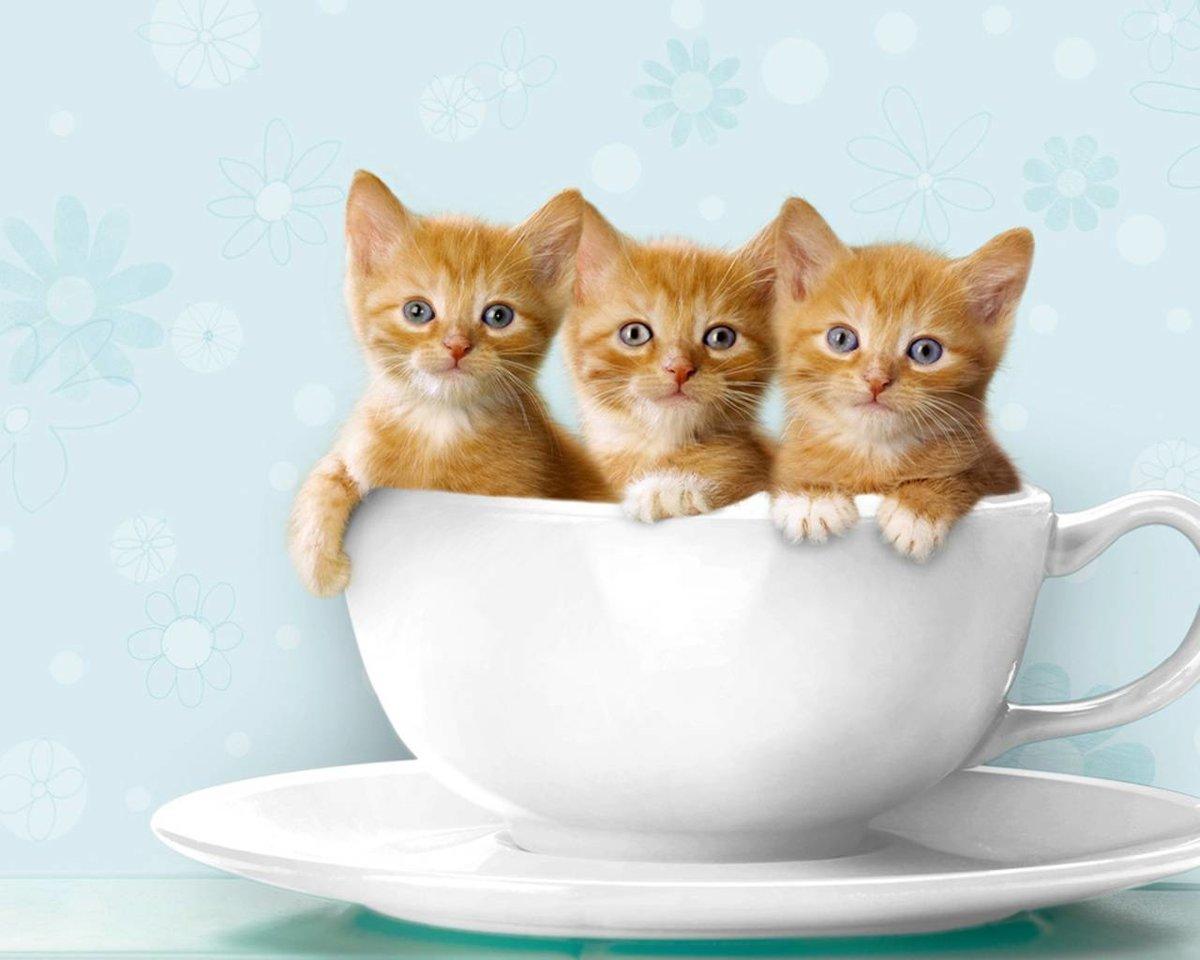 С Добрым утром, котенок! - гиф анимация 18