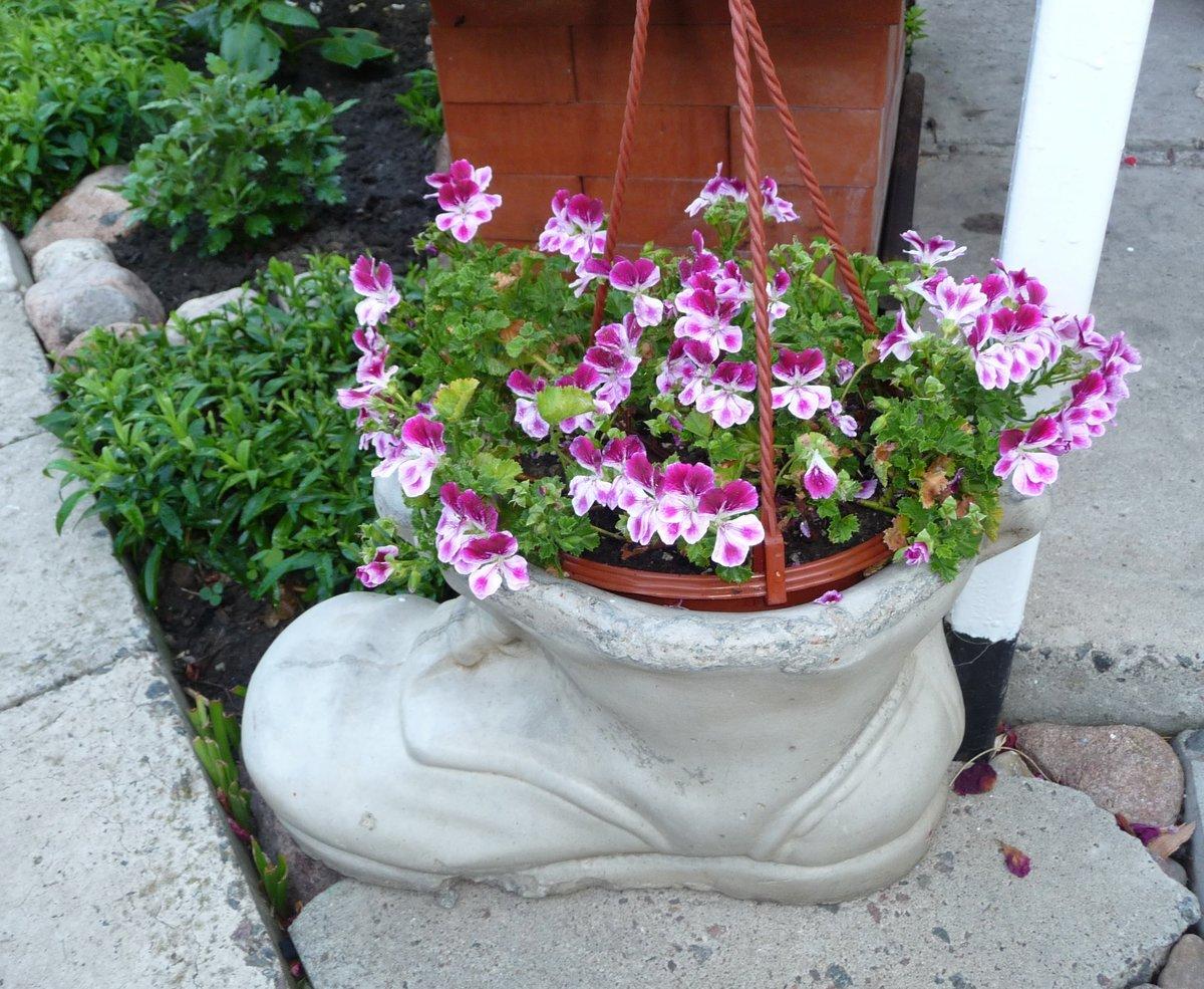 Когда комнатные цветы можно высаживать на улицу фото