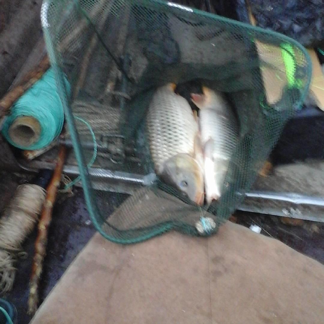 Голодная рыба прикормка своими руками