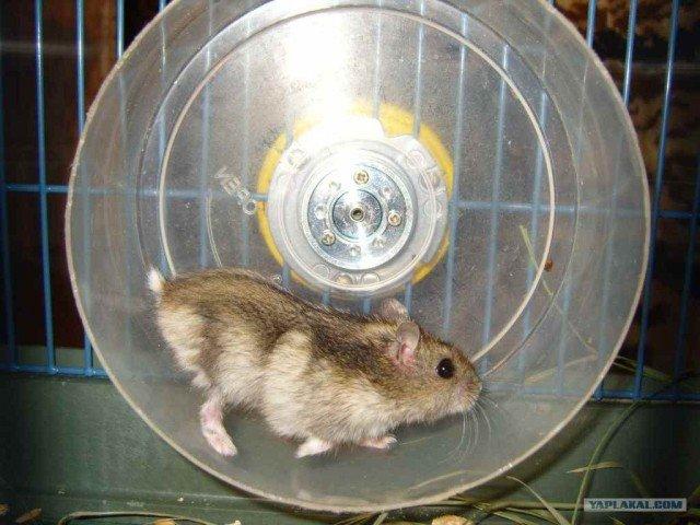 Видео как сделать колесо для хомяка своими руками