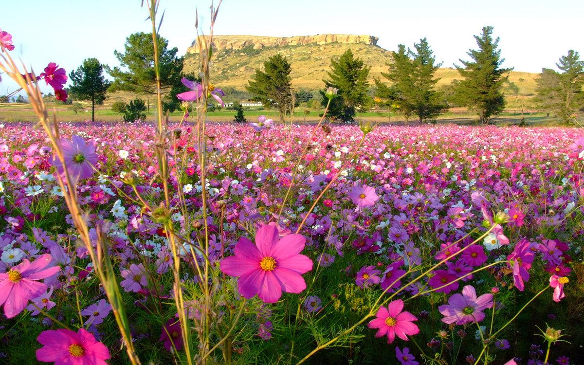 Название цветов на поле