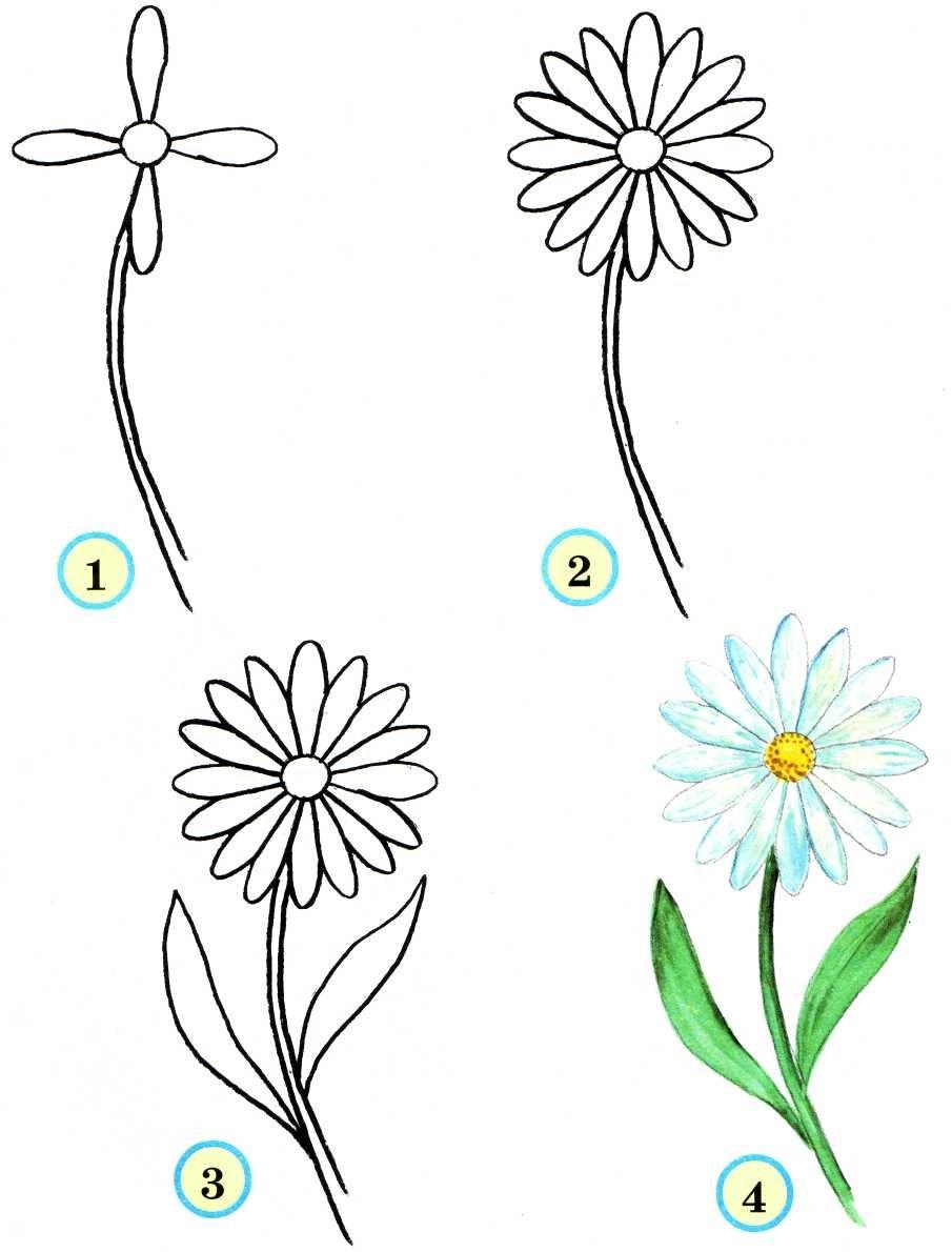 Как нарисовать красивый цветок поэтапно Lessdraw