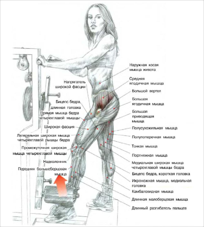 Как накачать ягодицы и бедра дома Растяжка ягодичных мышц: вариант 2