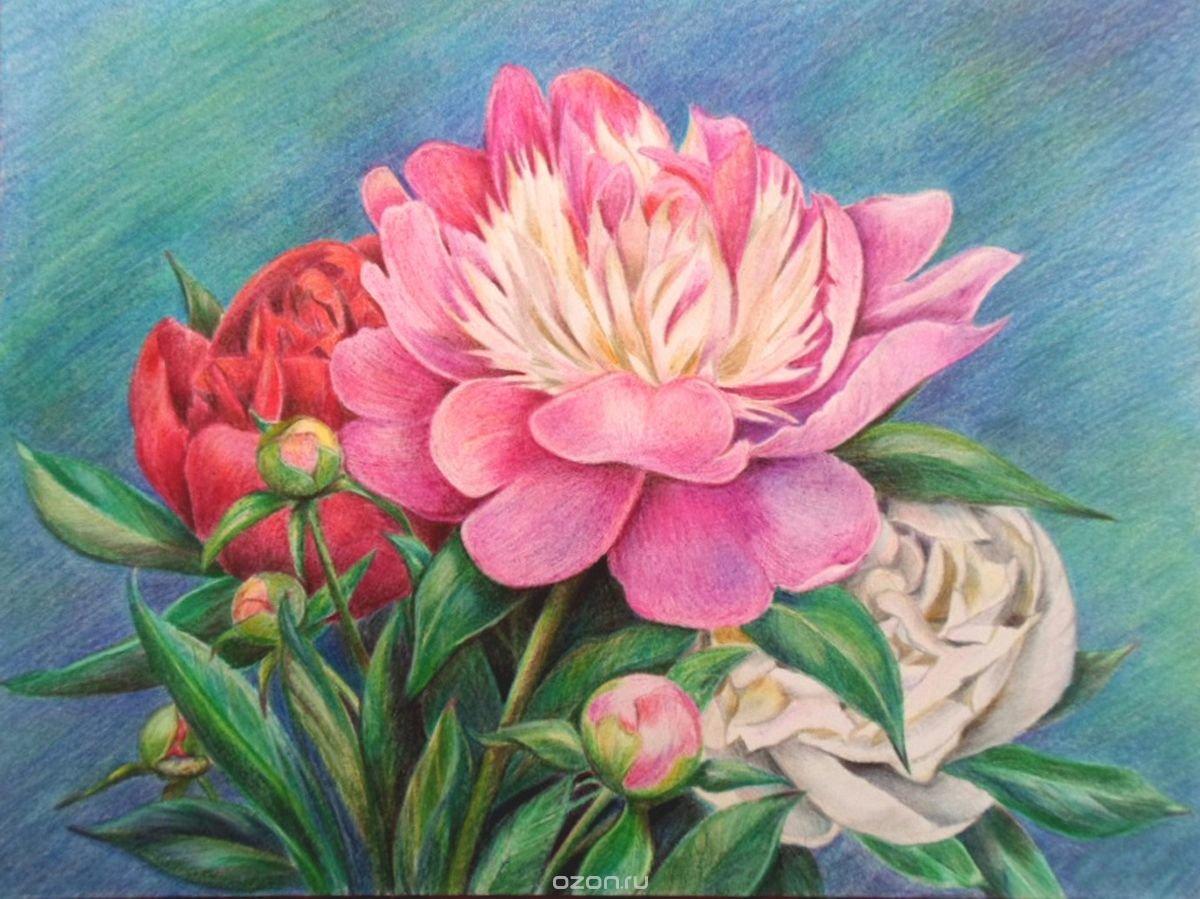 Рисование цветов карандашом фото