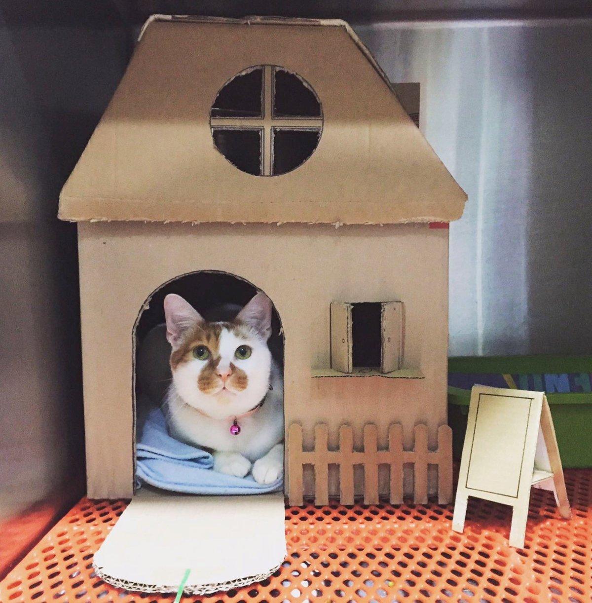 Кошке домик из коробок своими руками 95