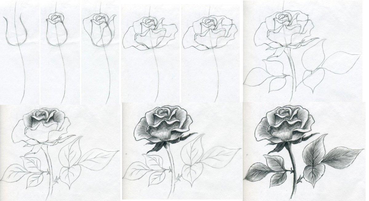 Как нарисовать розу своими руками поэтапно 80