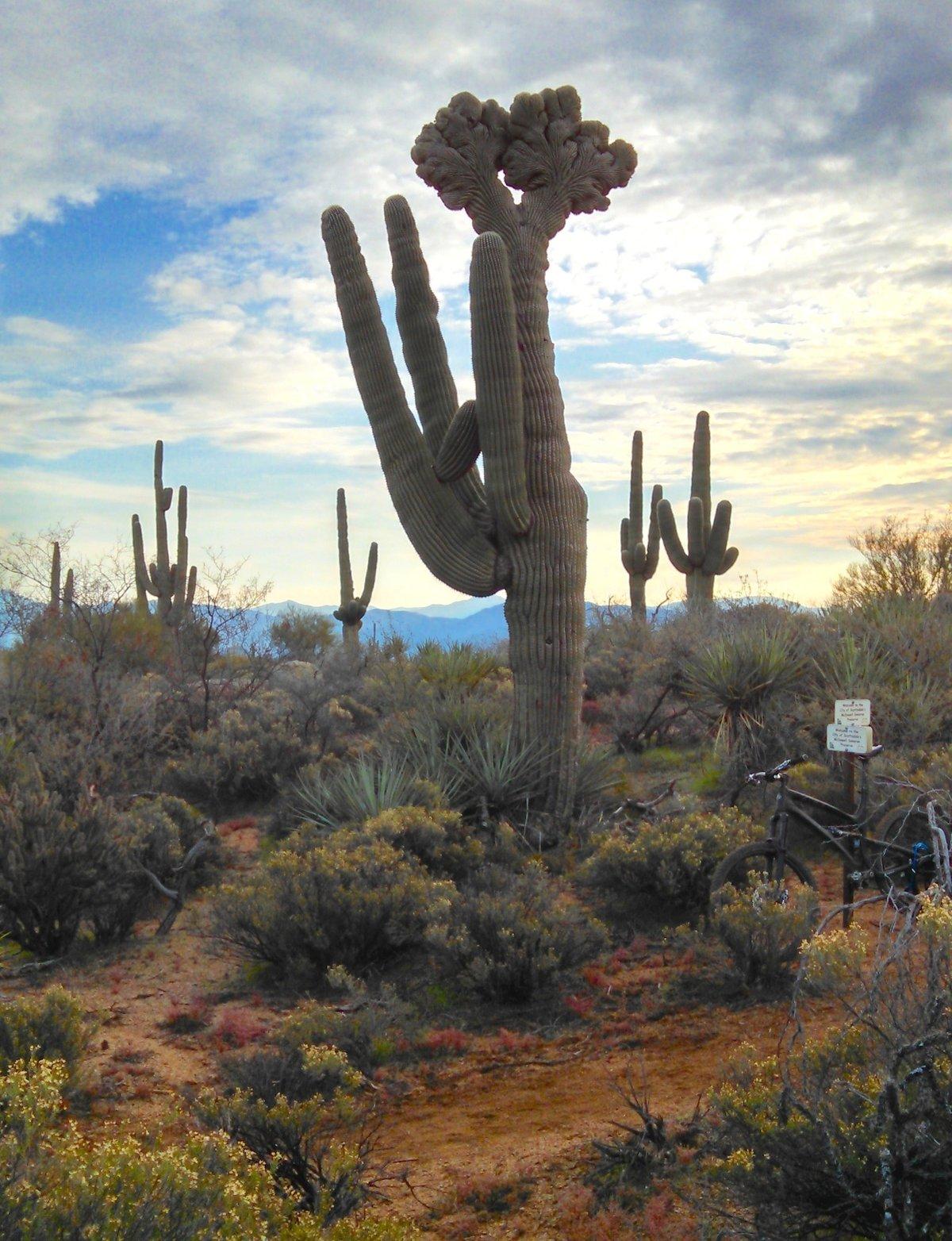 Arizona desert cactus pictures Arizona Sunsets Arizona Sunset Pictures