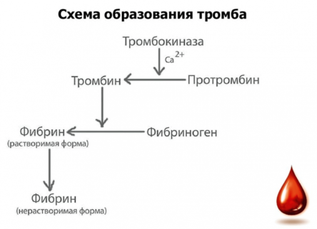 max_g480_c12_r4x3_pd10