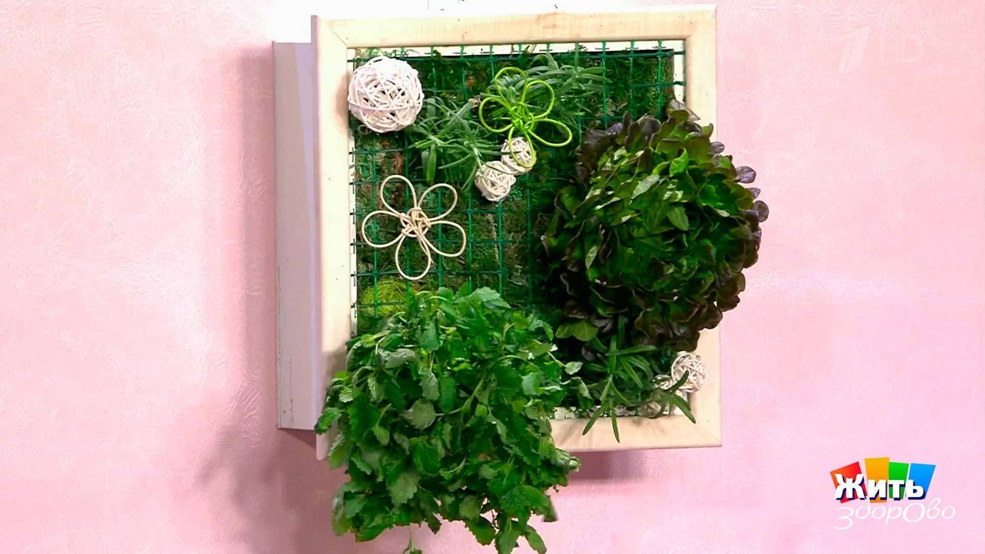Как сделать панно из растений? 92