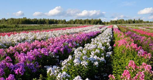 Урожай конверсий для «Садов Урала» с Метрикой для медийной рекламы