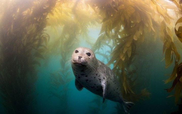 Биология морских млекопитающих