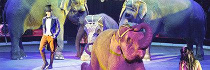 Циркові вистави
