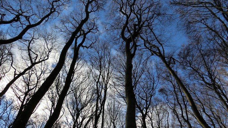 Тайны деревьев