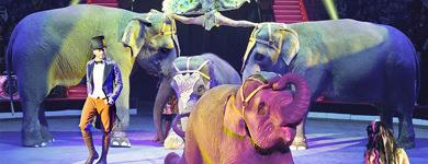 Цирковые представления