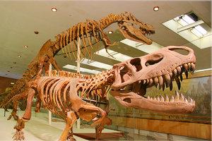 Постоянная экспозиция Палеонтологического музея