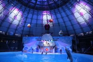 Цирковое шоу с морскими млекопитающими