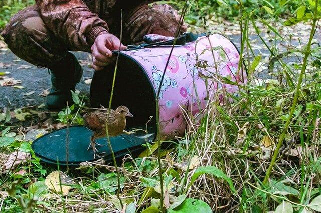 приют для животных — Орнитарий — Москва, фото №8