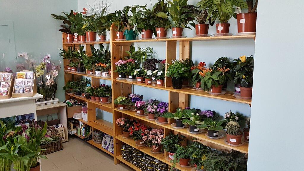 Магазин цветов в воронеже цены