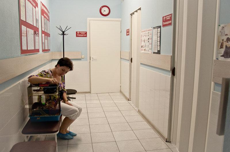 ветеринарная клиника — Красный лис — Санкт-Петербург, фото №3