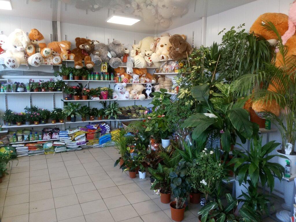 Камелия оптовый магазин цветов, для