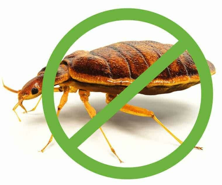 bed bugs pest control mission - 800×633